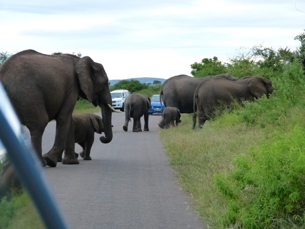 A herd passes by