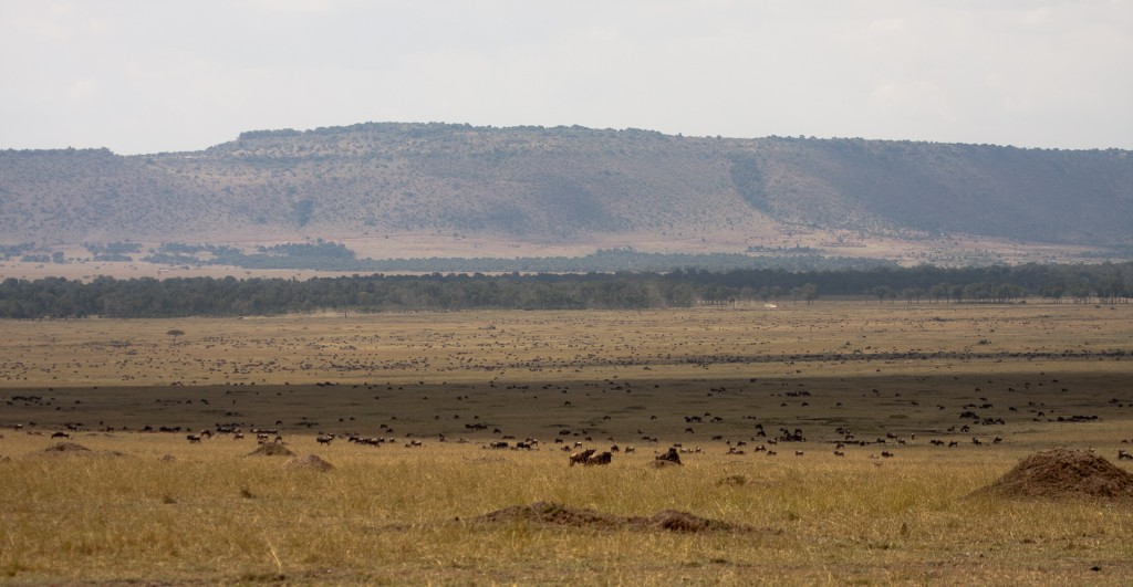 The great herds of Africa