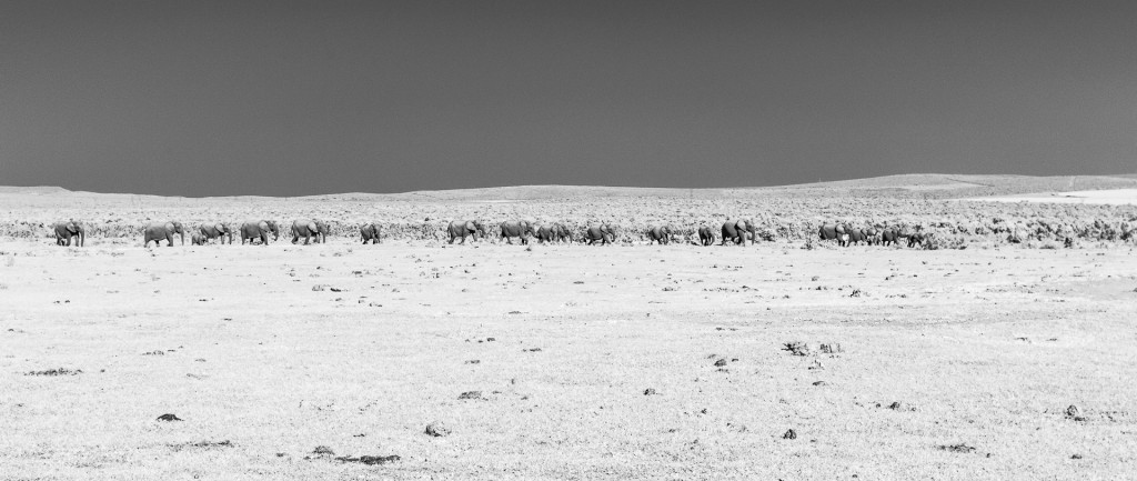 A herd of elephants in Addo National Park